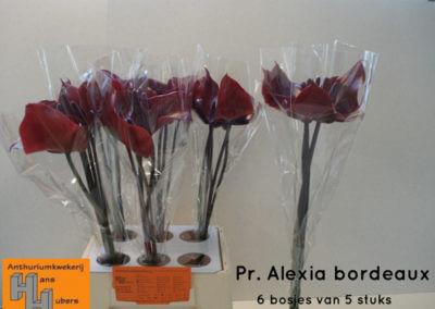 Pr. Alexia Bordeaux 7 tot 10 cm