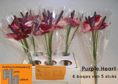 Purple Heart 7 tot 11 cm