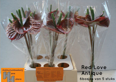 Red Love Anqitue 9 tot 11 cm