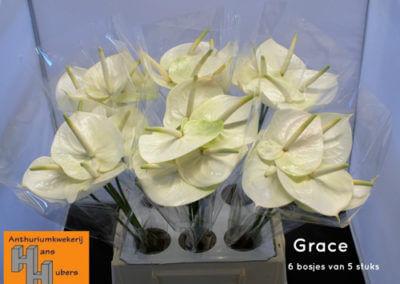 Grace 9 tot 11 cm