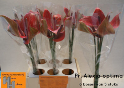 Pr. Alexia Optima 7 tot 10 cm