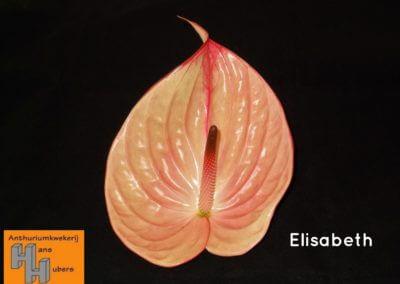 Elisabeth 11 tot 17 cm