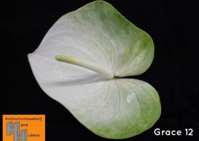 Grace 11 tot 17cm