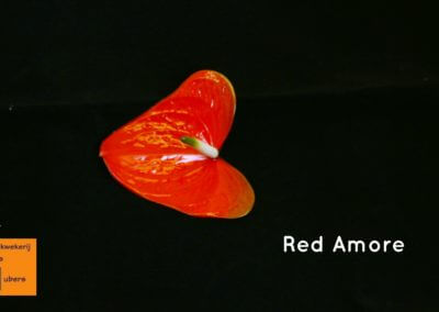 Red Amore 9 tot 13cm