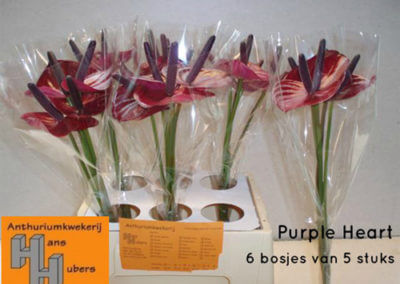 Purple Heart 7 tot 11 cm